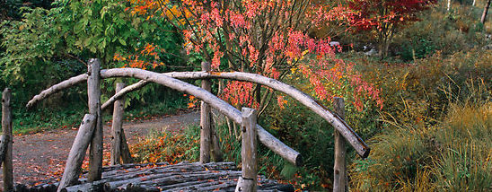 Bridge - Autumn Color